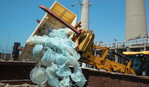 发电厂遭水母入侵 员工用挖掘机清理