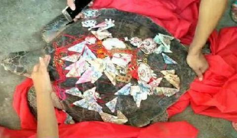 渔民捕百斤大海龟  在海龟壳上写自己名字并绑人民币将其放生